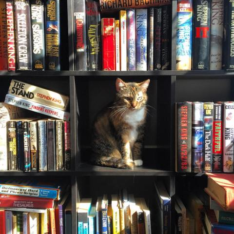 cat librarian.jpg